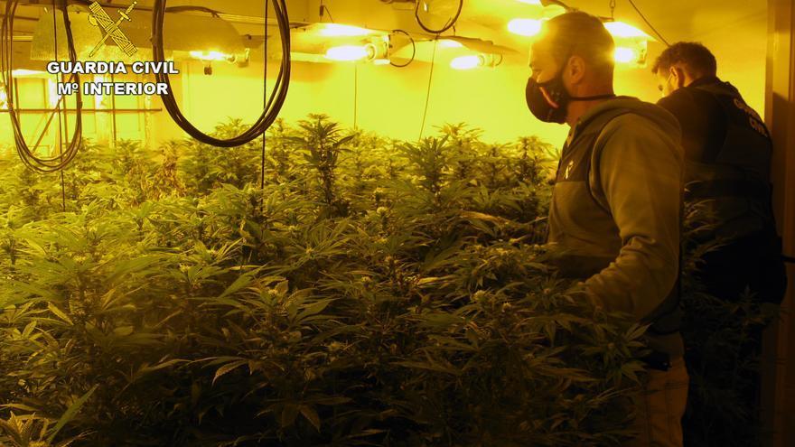 Desmantelado un invernadero con cerca de 200 plantas de marihuana en Librilla