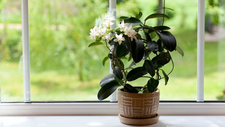 Trucos de botánica: Estas son las plantas de interior fáciles de cuidar que te ayudarán a mantener la casa fresca