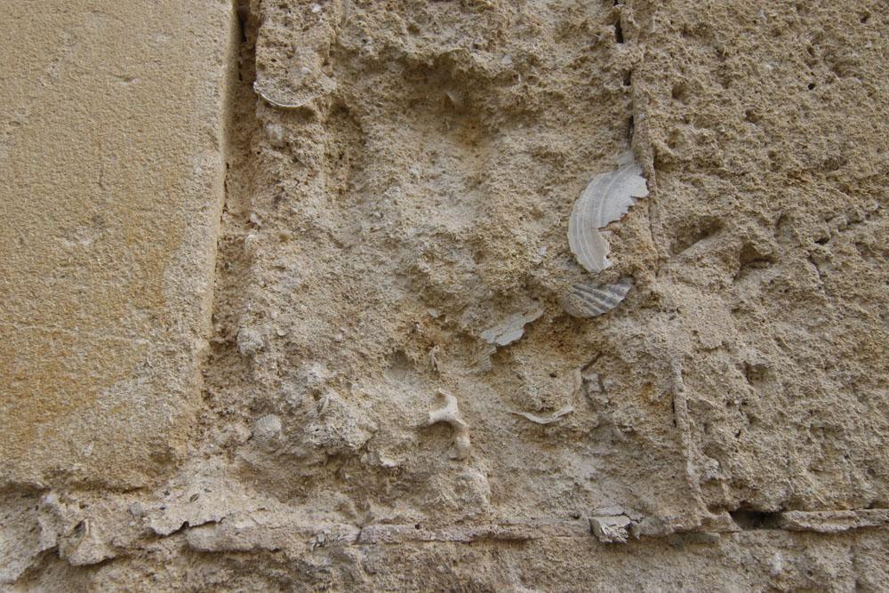 Los habitantes de la Mezquita Catedral del mioceno