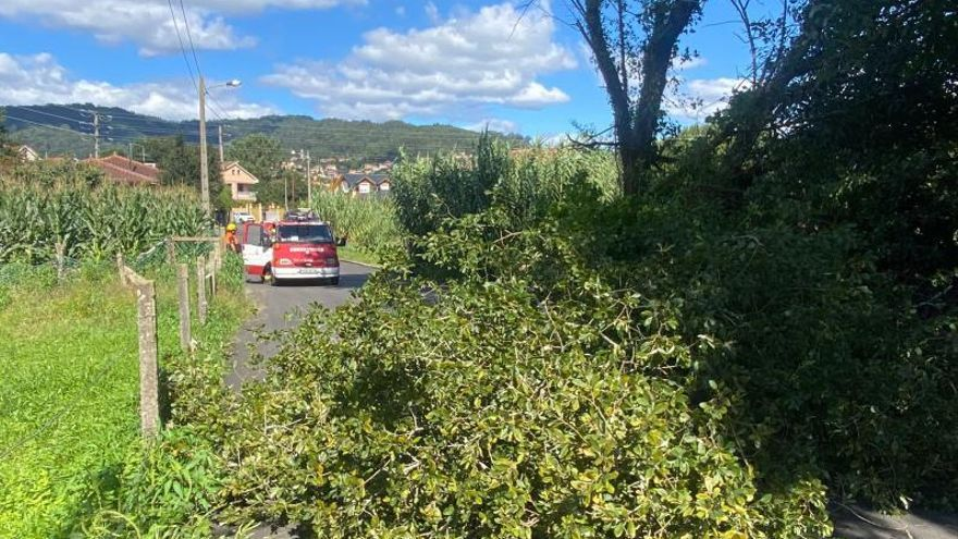 La caída de un árbol corta el tráfico en un vial de Coiro