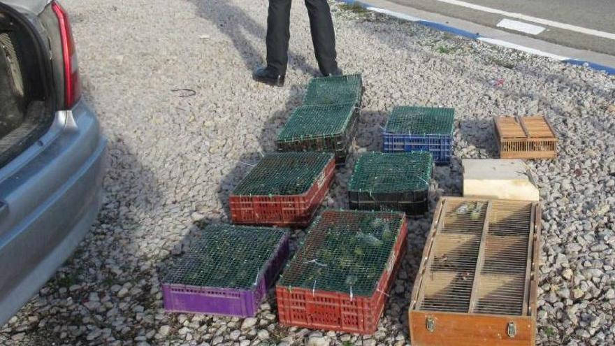 Hallan 195 aves en el maletero de un coche en Teruel
