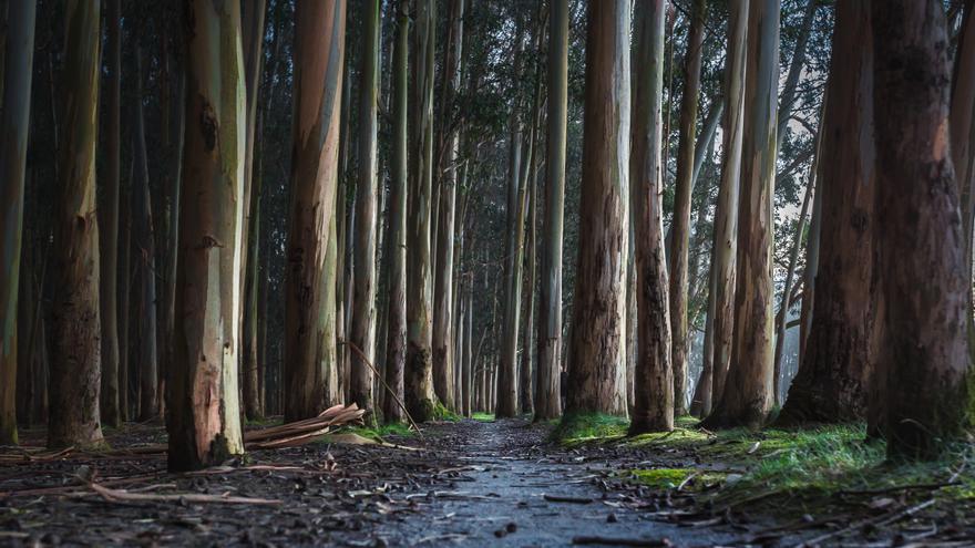 Los montes gestionados por Ence propician anualmente la retirada de 230.000 toneladas de CO2 de la atmósfera