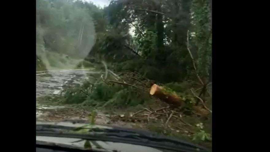 Destrosses del temporal del 17 de juny del 2021 a Borredà
