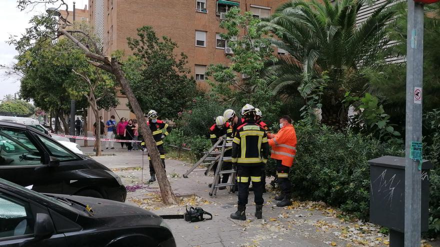 Un árbol cae sobre una mujer en València