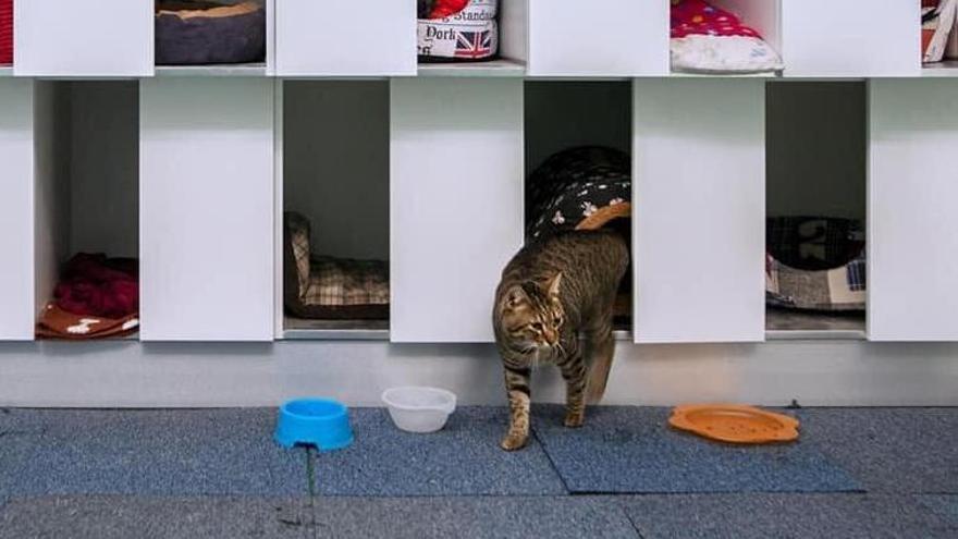 Los gatos ya no viven en jaulas en la Protectora