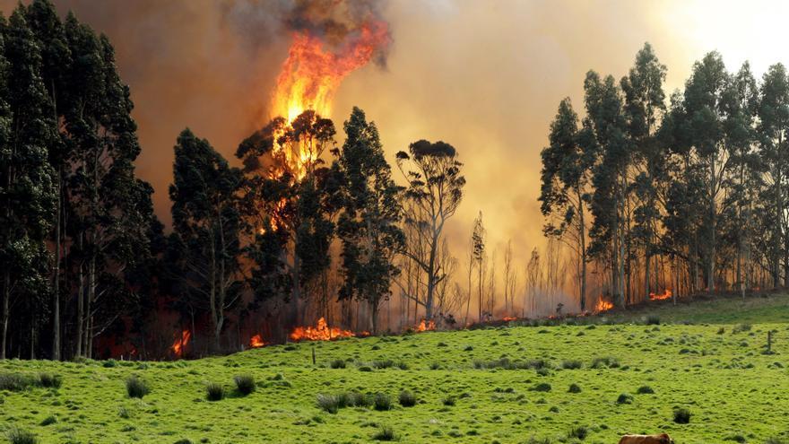 Incendios forestales en Asturias: los bomberos luchan contras las llamas en Nava, Illano y Aller