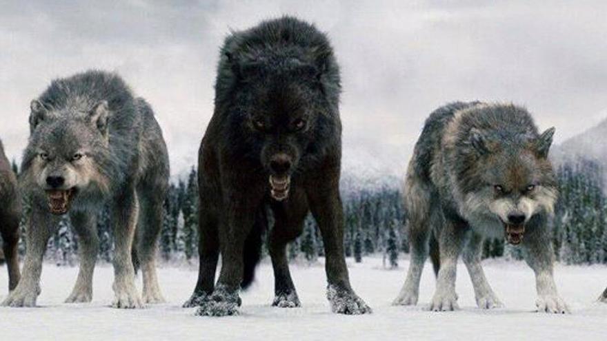 El ADN revela cómo eran los lobos gigantes de 'Juego de tronos'