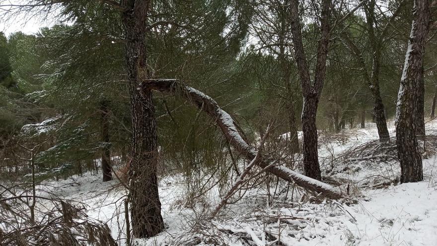 El PSOE de Zamora pide la retirada de los árboles caídos en Valorio durante la nevada de 2018