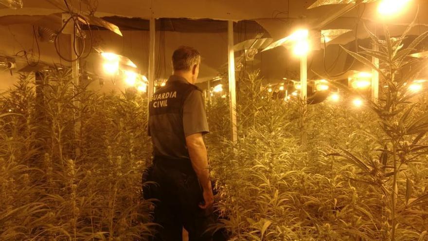 Siete detenidos en As Somozas por la mayor plantación de marihuana en Galicia