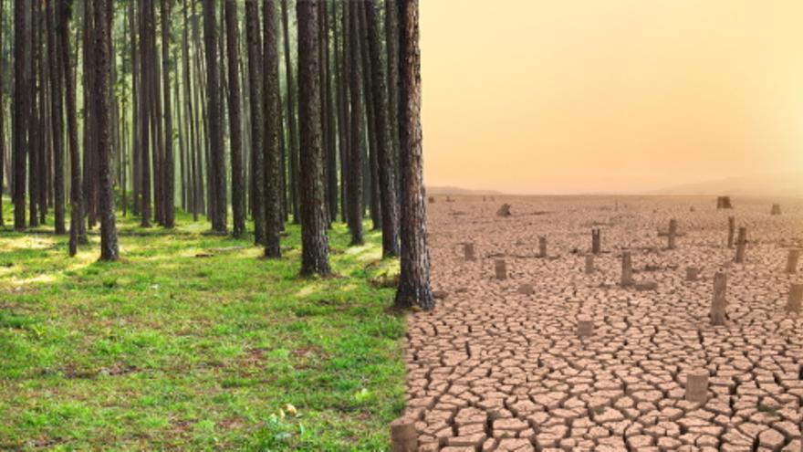 Juntos contra el cambio climático: objetivo cero emisiones