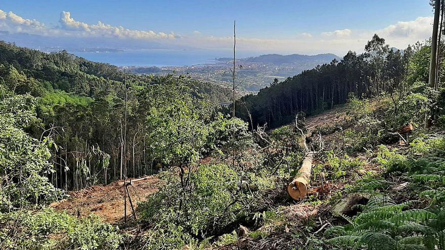 La Guardia Civil investiga una tala en la Fraga de Coiro por la denuncia de que afecta a fincas particulares