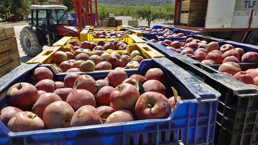 Manzanas de La Sarga: la resistencia más dulce