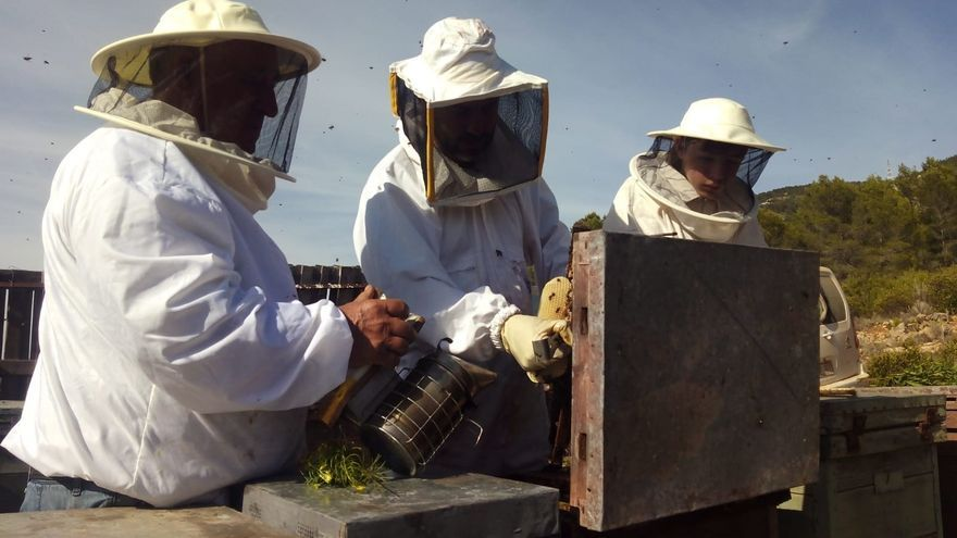 Los apicultores presentan al Consell un plan de viabilidad para evitar la desaparición del sector