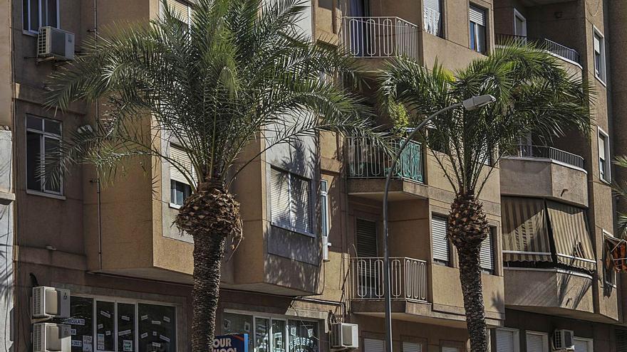 Una empresa contratada para podar 3.500 palmeras deja tirado al Ayuntamiento a los dos días