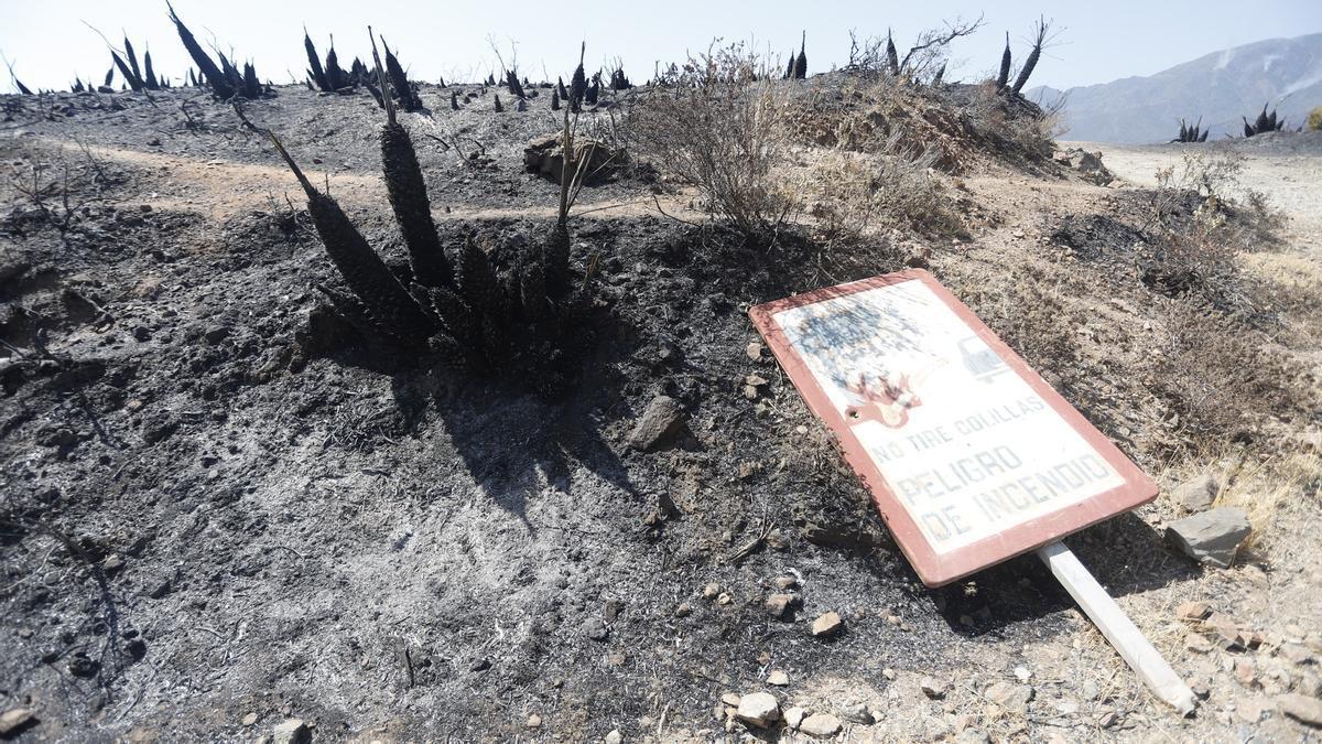 Parajes quemados en el que los medios aéreos y terrestres continúan este sábado luchando contra el incendio en Sierra Bermeja