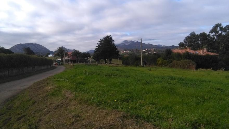 Muere un joven de 30 años en Ribadesella alcanzado por la rama de un eucalipto