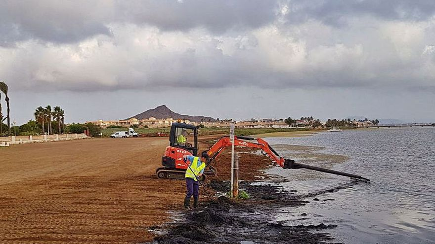 Unos treinta operarios retiran biomasa en agosto en las playas del sur del Mar Menor