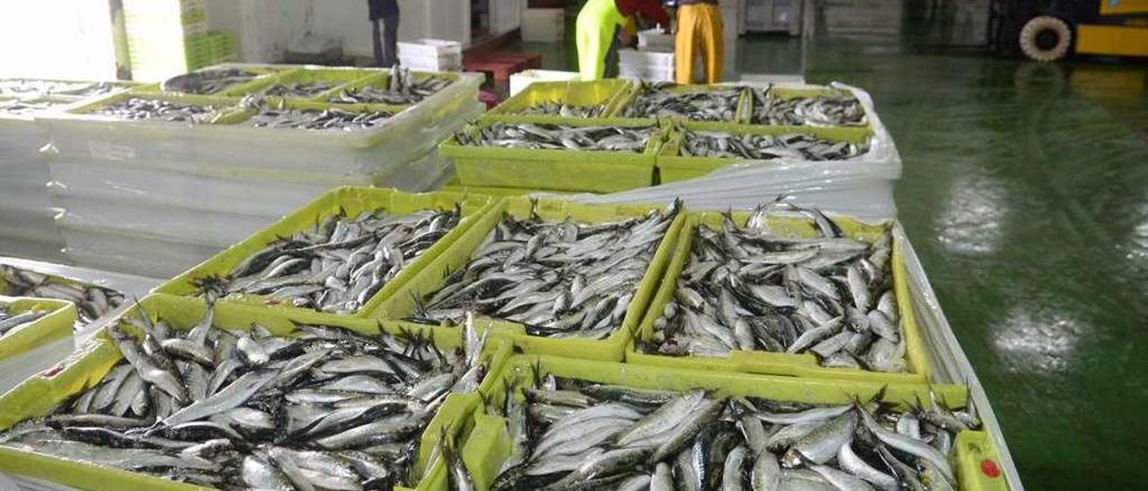 Cajas de sardinas listas para ser subastadas.
