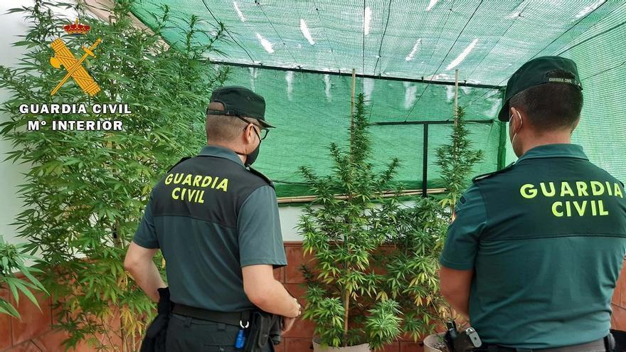 Desmantelada en La Rambla una plantación de marihuana en la azotea de una casa