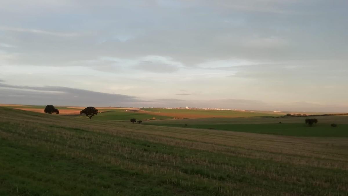 Campo de cultivo afectado por la ZEPA del Guadiato.