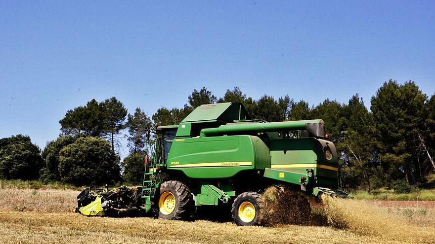 La collita de cereal, un 10% superior a la de l'any passat tot i la sequera