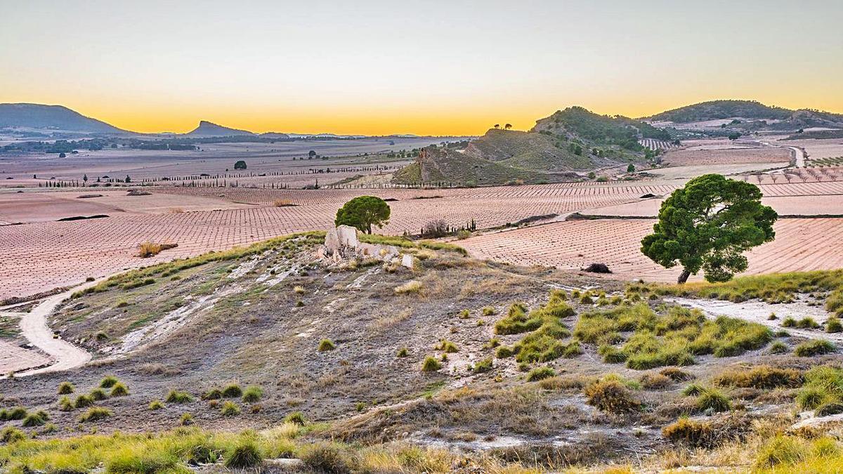 Terreno donde está proyectada la planta fotovoltaica en Jumilla.