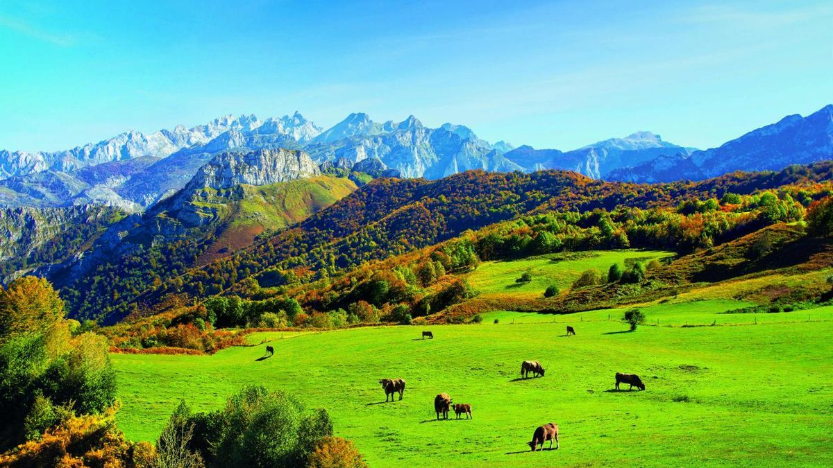 Pastos naturales en Asturias.
