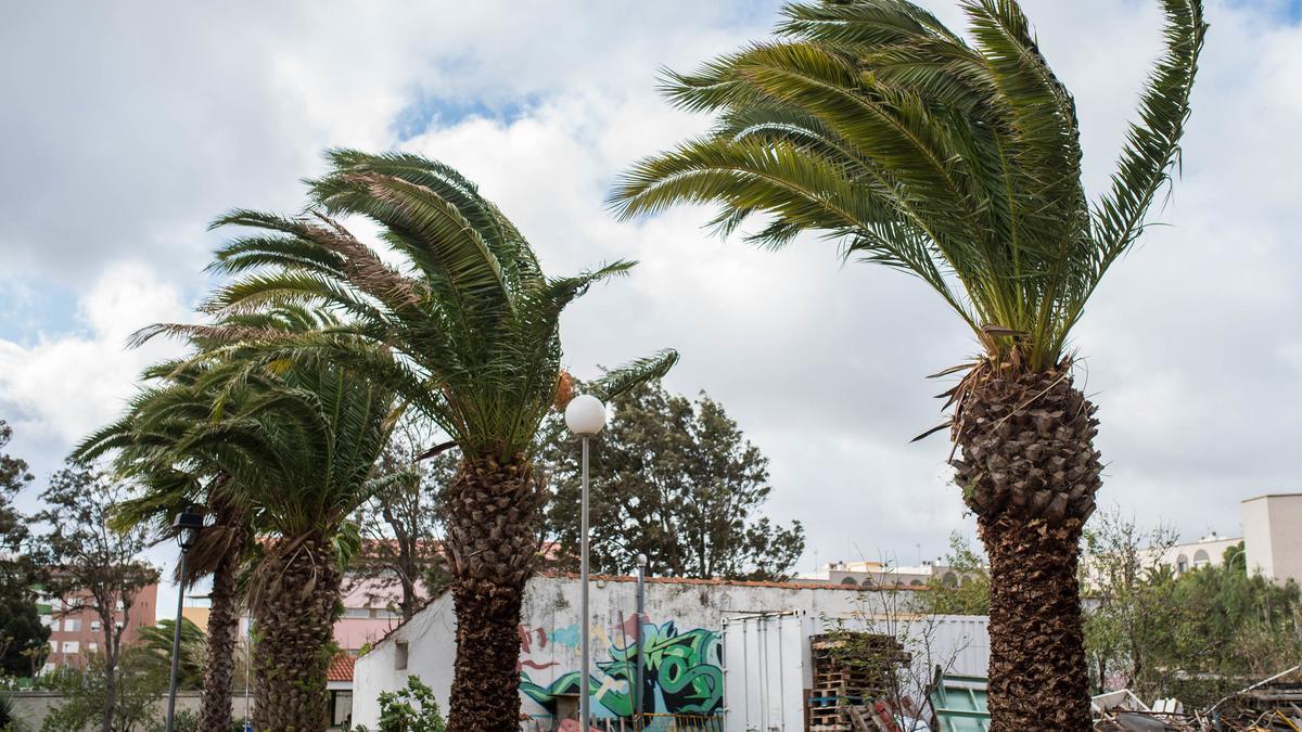 Las rachas de viento podrían alcanzar los 90 km/h.