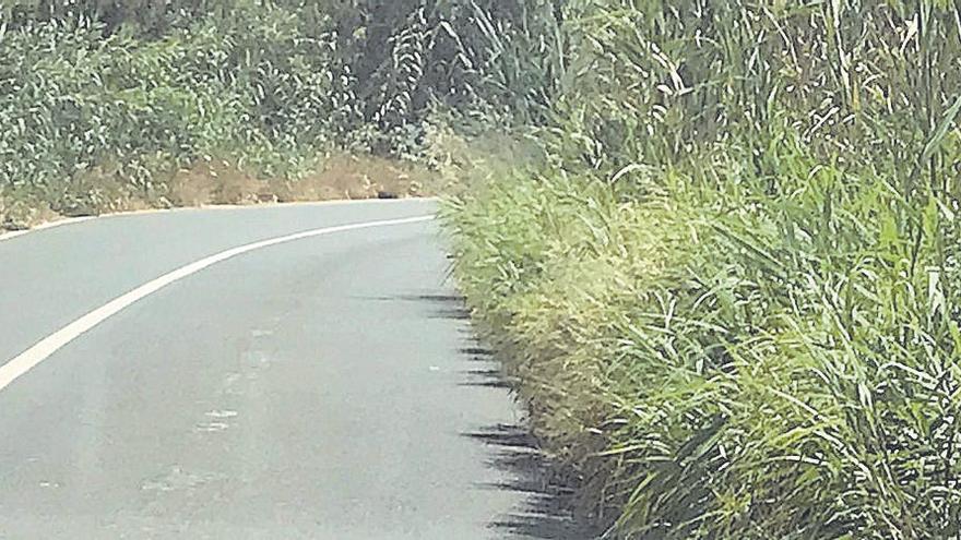Piden que se retire el cañizo que invade la carretera de s'Albufera por el peligro que supone