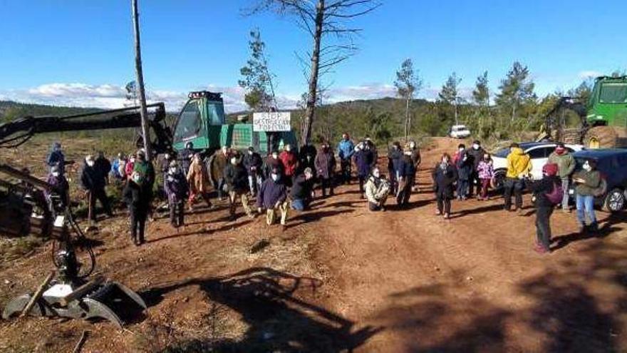 La Fiscalía investiga la tala masiva de árboles en Puebla de Arenoso