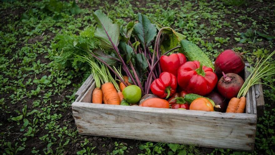 Teruel recibirá 37.895 kilos de alimentos para las personas desfavorecidas