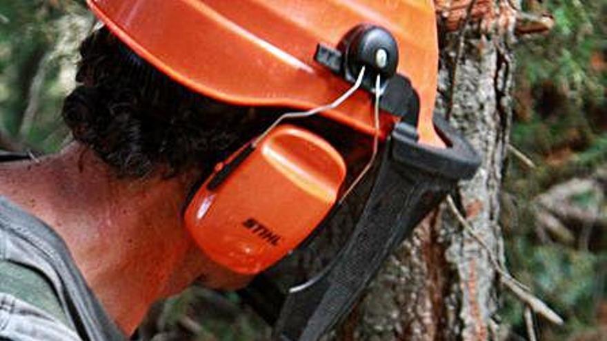 Integra Pirineus estrena un projecte d'ocupació en la gestió forestal