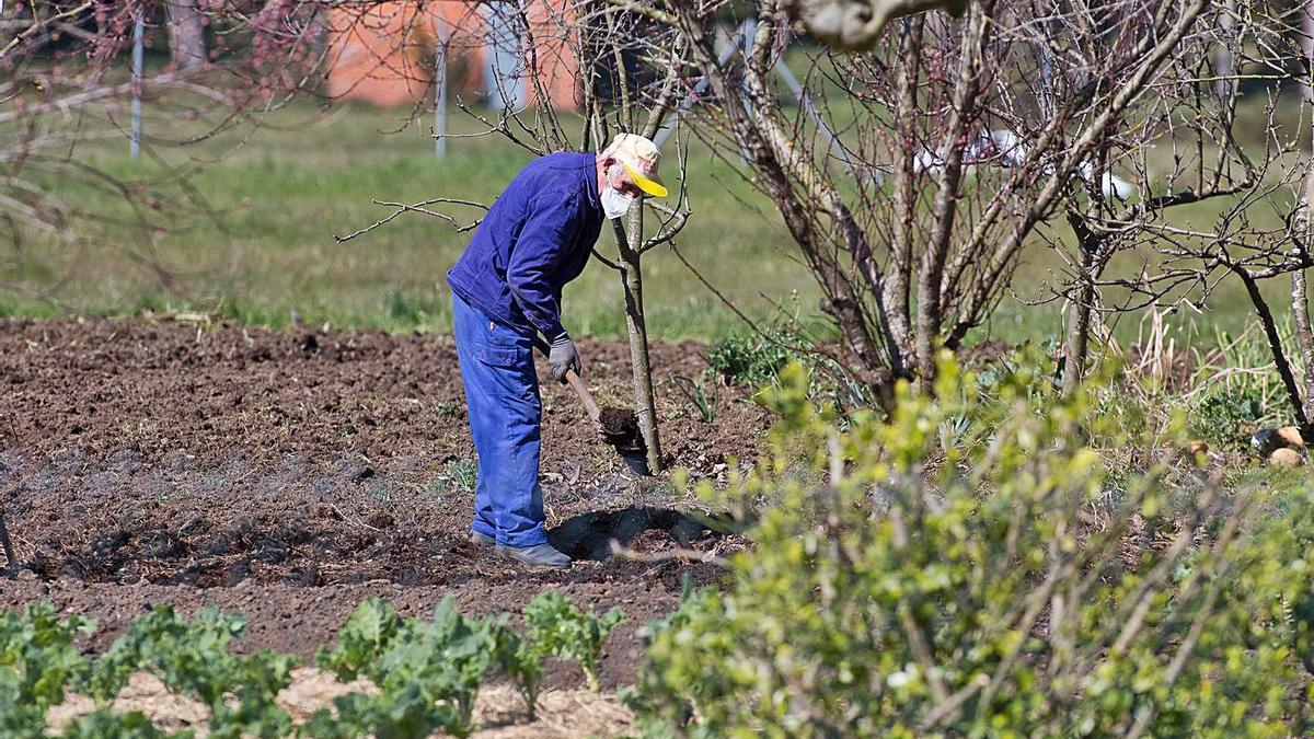 Un agricultor trabaja la tierra en Lugo