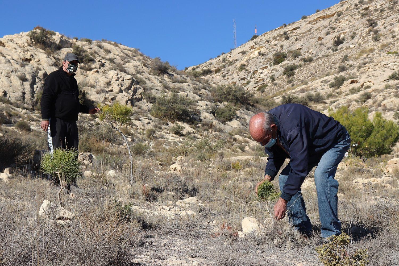 Cándido y Damián observan el estado de los pinos que plantaron para repoblar la zona