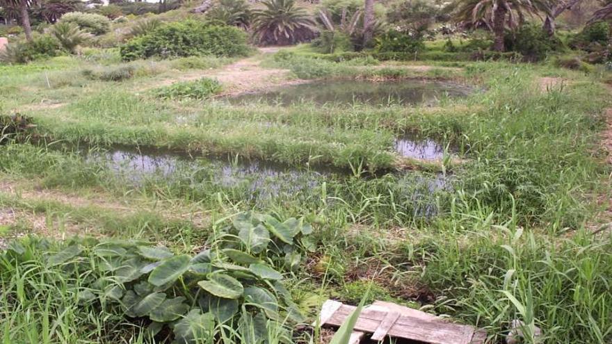 La ULPGC ensaya con éxito en Tafira  la depuración natural de fármacos en aguas residuales