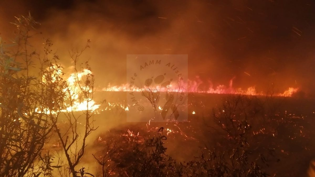 Fuego en Nuez de Aliste.