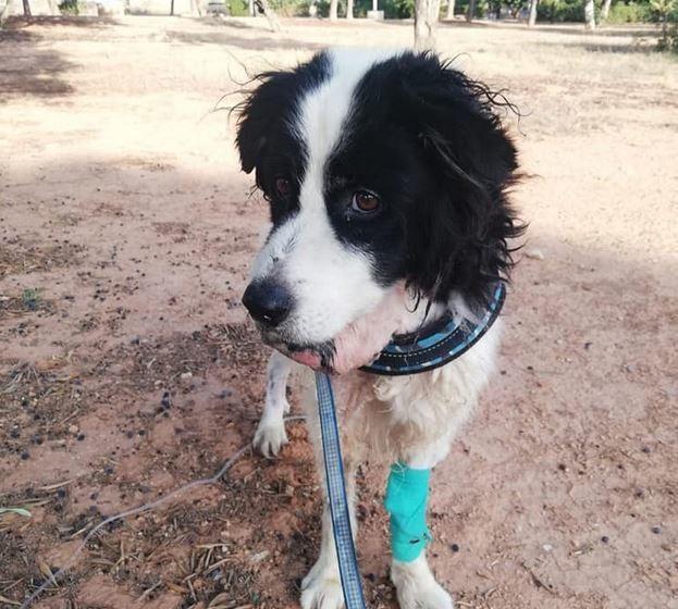 Rescatan a un perro abandonado dentro de un saco atado en Albal