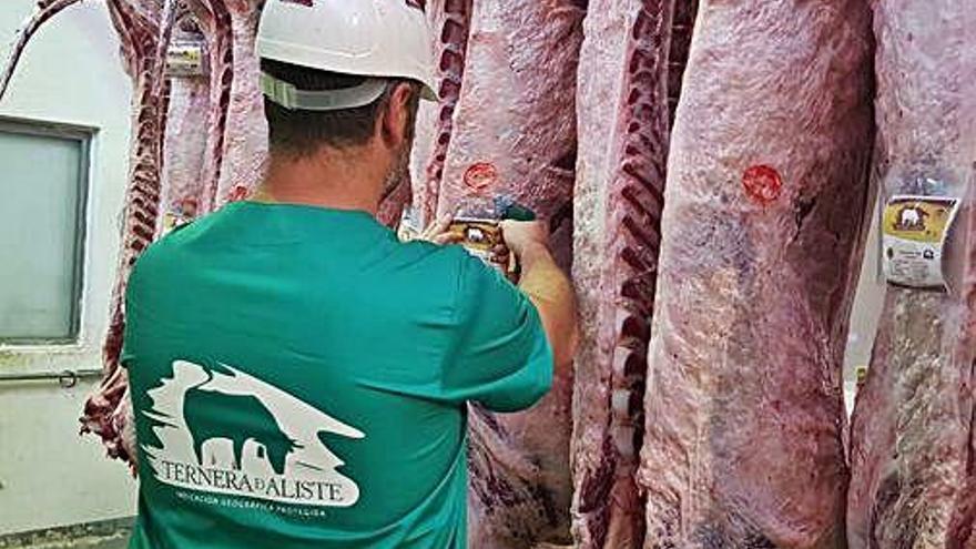 Ternera de Aliste incrementa sus ventas en el primer semestre hasta los 168.000 kilos