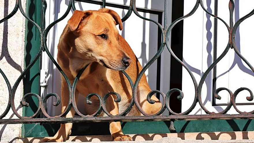 ¿Mi vecino está maltratando al perro?