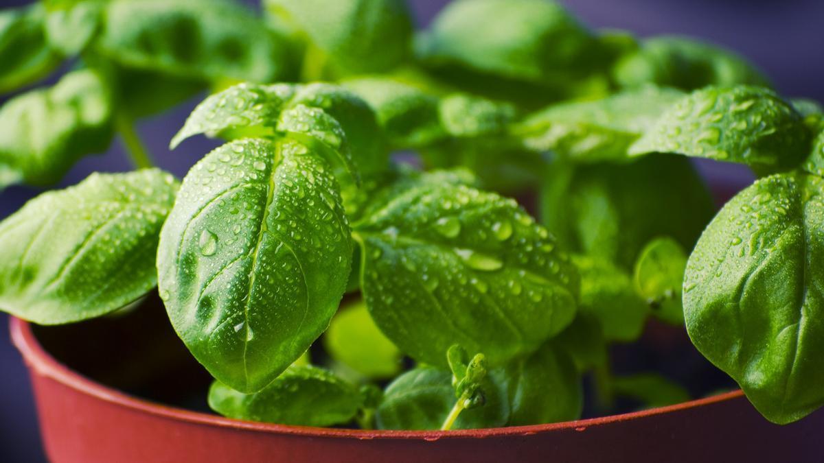 Remedios caseros para cuidar tus plantas con vinagre.