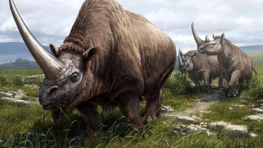 Investigadores trazan el árbol genealógico del rinoceronte