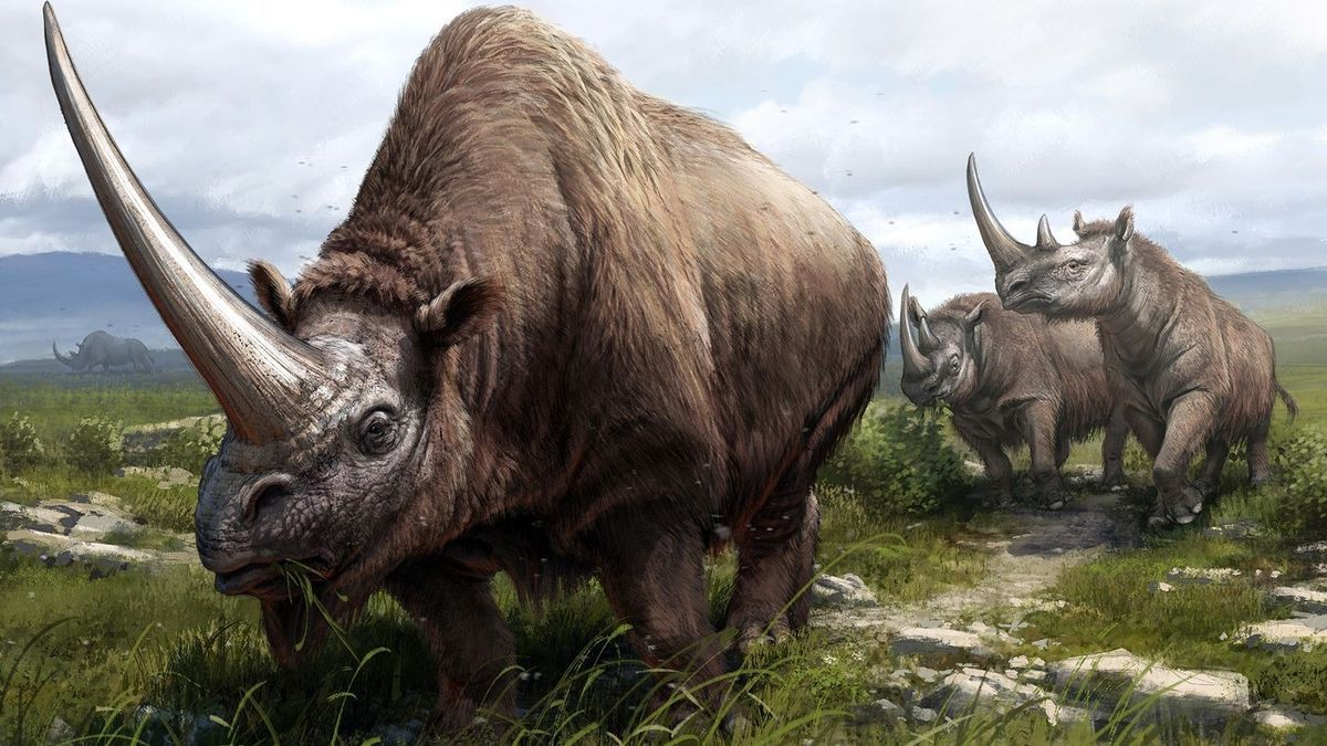 Ilustración de tres especies extintas de rinocerontes.
