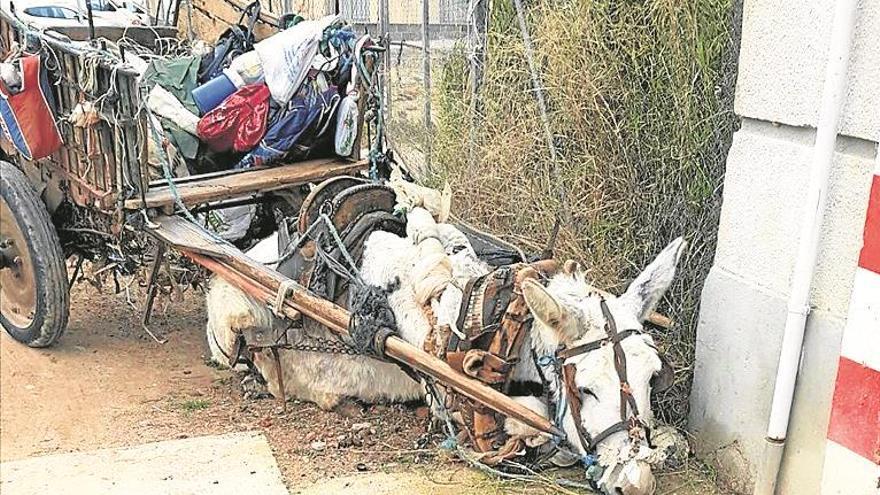 Más de 12.500 peticiones para salvar a un burro