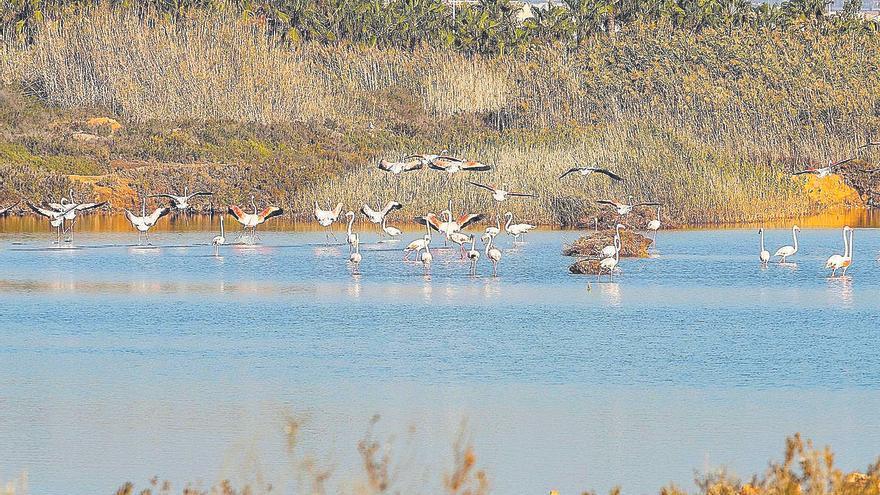 Qué hacer hoy en la Región: cuida el principal entorno natural del Mar Menor