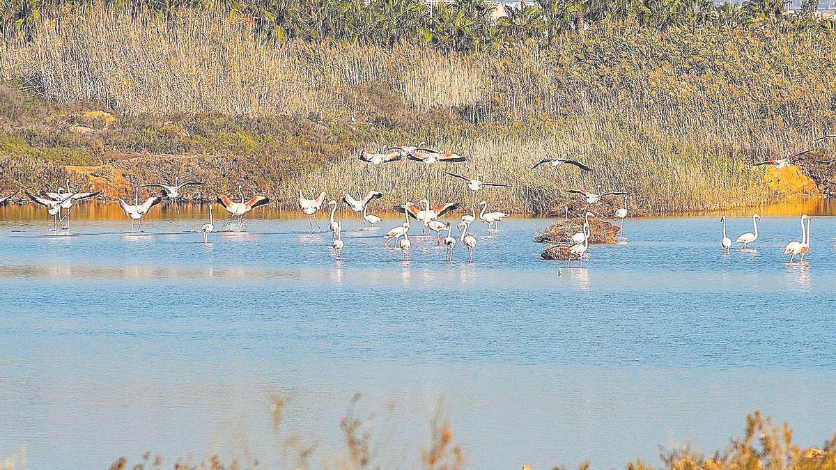 Parque Regional Salinas y Arenales de San Pedro del Pinatar.