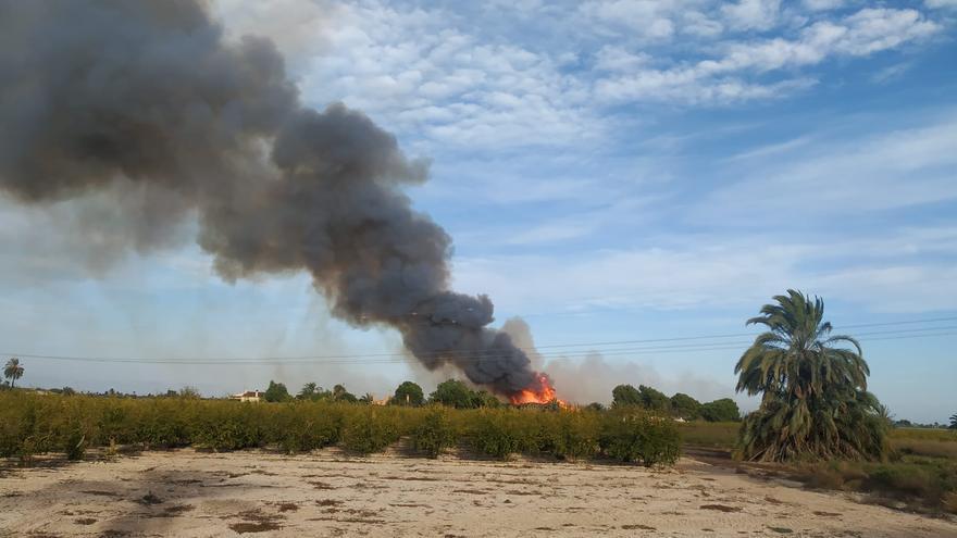 Aparatoso incendio de un huerto de palmeras en la carretera de La Marina