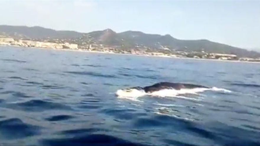 Aparece una ballena muerta en la playa de Mataró