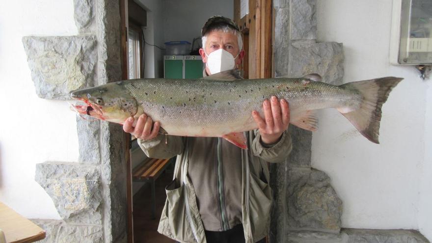 El campanu del Sella, un salmón de casi ocho kilos