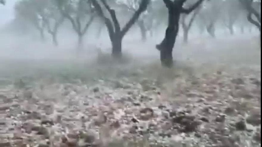 La lluvia y el granizo dejan daños en Utiel-Requena