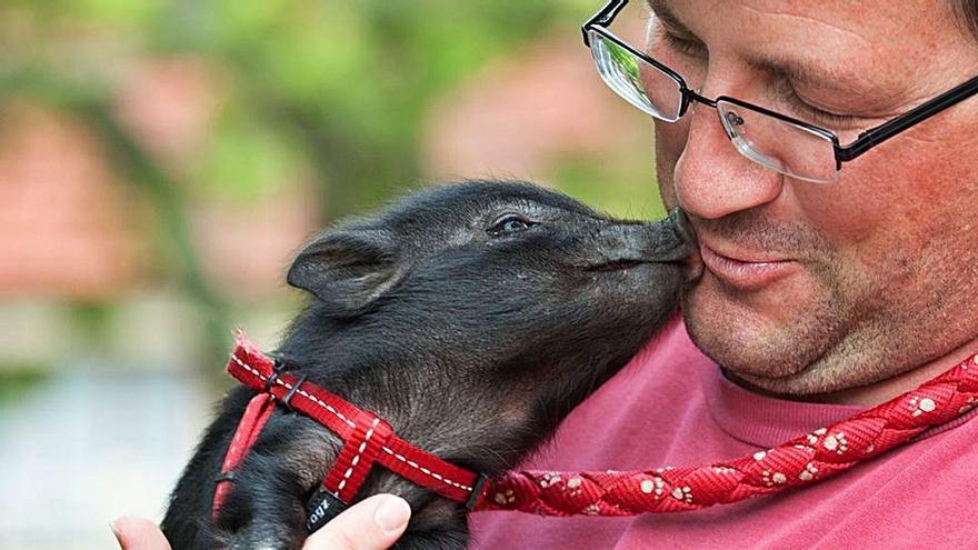 Educando a un cerdo